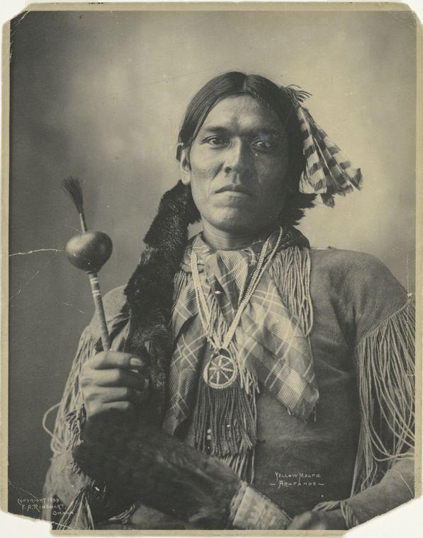 Yellow Magpie, Arapahoe.