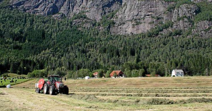 Norsk landbruk er en suksess