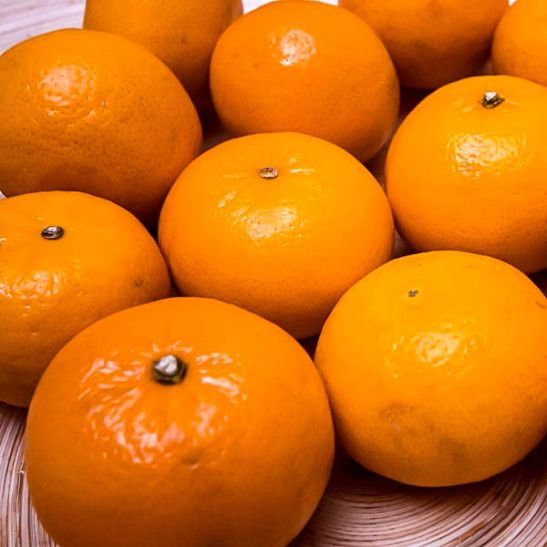 Miho Satsuma Orange Tree For Sale Online | The Tree Center