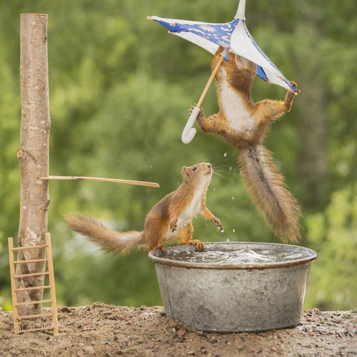 swim with fun - close up of  red squirrels  hanging with an umbrella over an bath tub