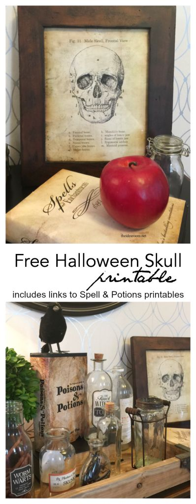 Halloween Decorations | Looking to add a vintage skull anatomy sign to your Halloween Decor? Print this free Halloween Printable to add to your Halloween decorations.