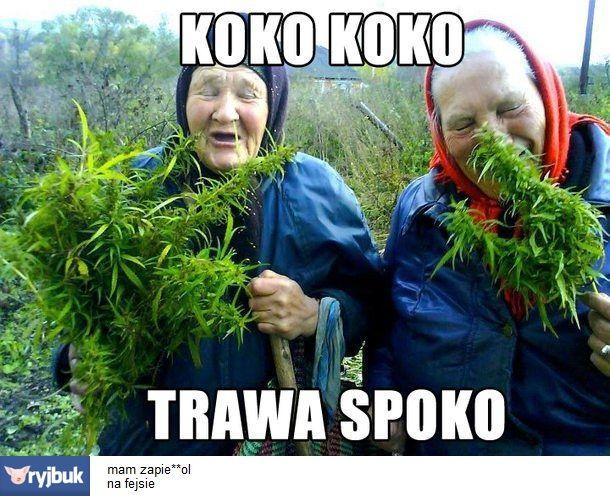 Polish fine herbs in grandma's garden