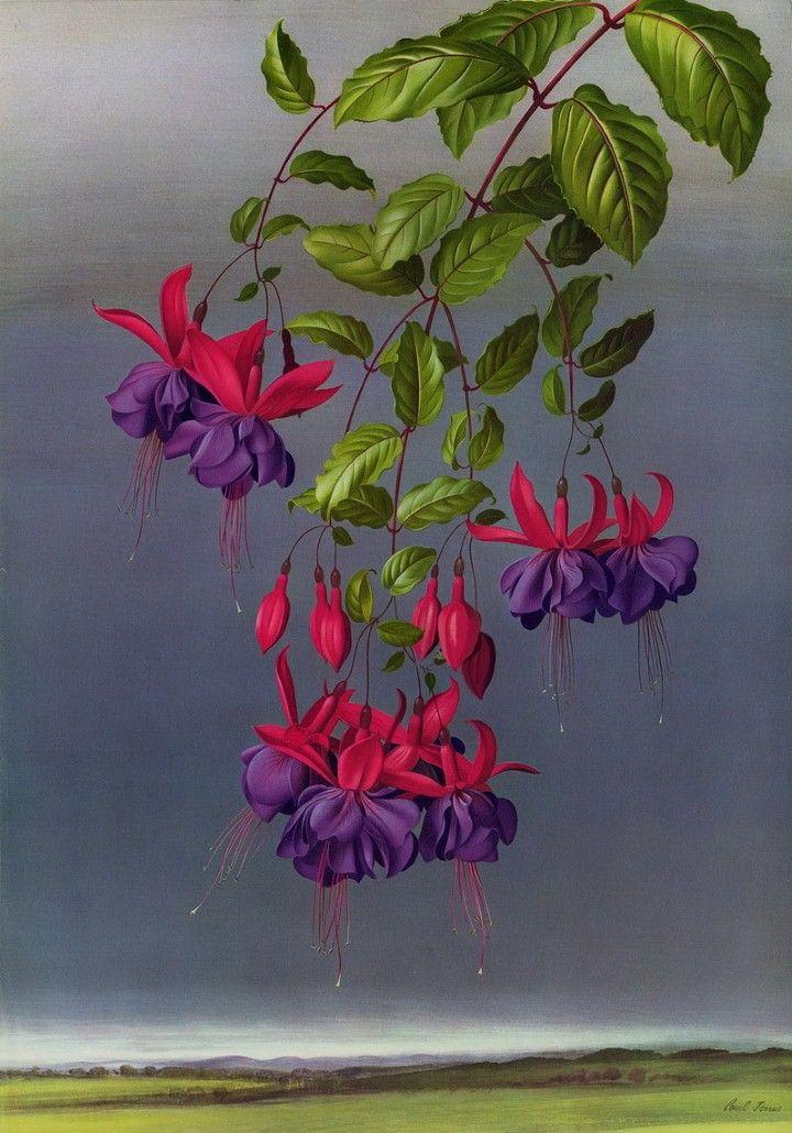 Paul Jones   Цветочные иллюстрации. Комментарии : LiveInternet - Российский Сервис Онлайн-Дневников