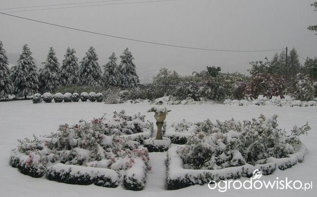 O....! - strona 490 - Forum ogrodnicze - Ogrodowisko