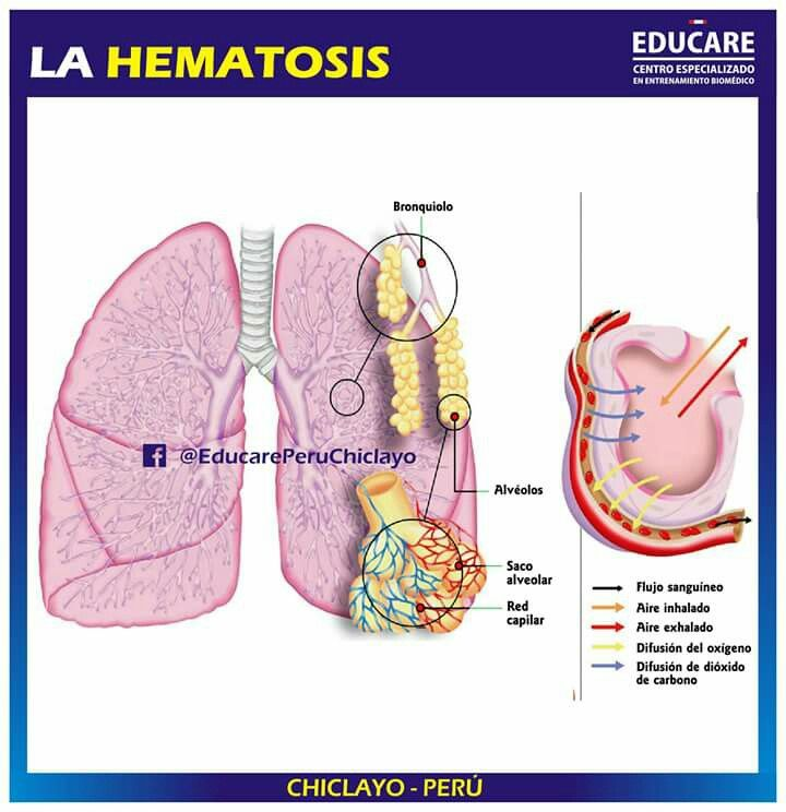 Pin De Bett Munoz En Enf Enfermeria Anatomia Dioxido De Carbono