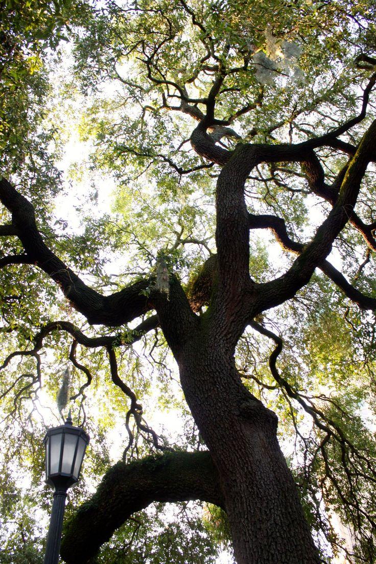 Fun Things To Do In Savannah GA - a local's guide