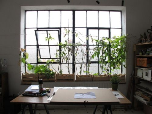 Steel Fixed Windows : Large fixed windows with smaller operable
