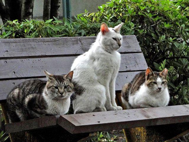 ボス風格の野良猫の写真を無料ダウンロード(フリー素材