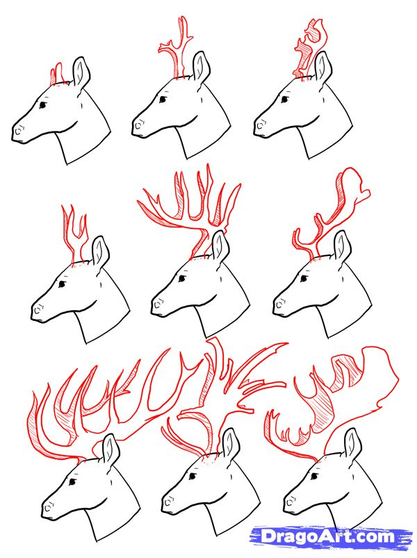 How to Draw Deer, Drawing Deer, Step by Step, forest animals, Animals, FREE Online Drawing Tutorial, Added by MauAcheron, June 24, 2012, 1:28:17 am