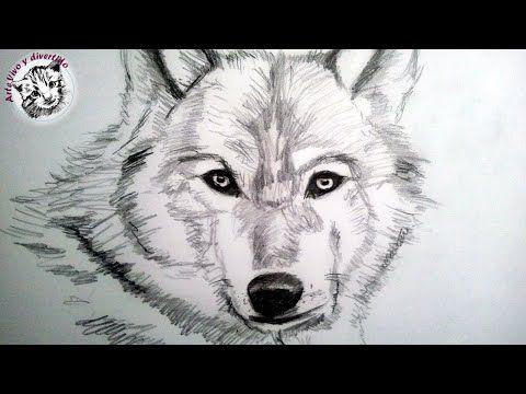 Como dibujar un lobo a lapiz, paso a paso: Como dibujar animales con pelo - YouTube
