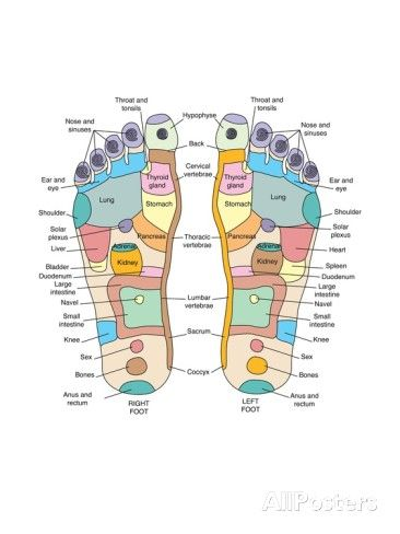 Reflexology Foot Map, Artwork Photographic Print by Peter Gardiner at AllPosters.com