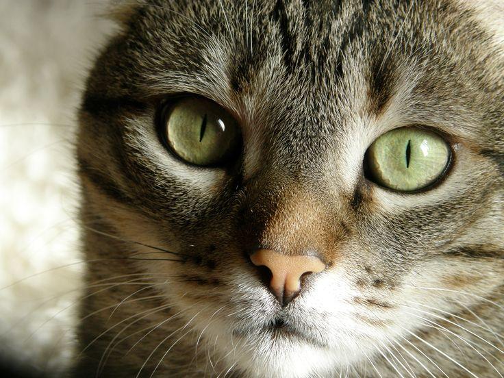 Toula the cat.