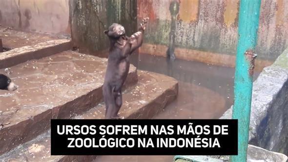 Em vídeo feito num Zoológico na Indonésia, ursos imploram comida para os visitantes - é simplesmente de cortar o coração.