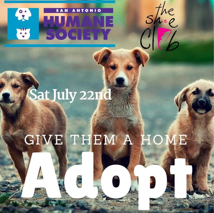 Dog Adoption Centers In Indianapolis