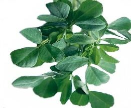 image of Fenugreek as Fast acting Acne home remedies
