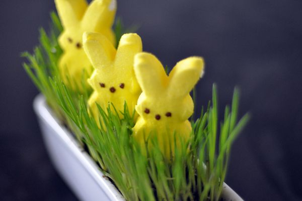 cute easy to makes centerpieces for easterColors Combos, Easter Centerpieces, Baby Shower Ideas, Wheat Grass, Wheatgrass Decor, Cute Ideas, Easter Crafts, Easter Bunnies, Spring Decorations