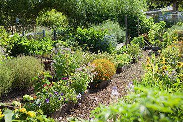 Harlow Carr kitchen garden