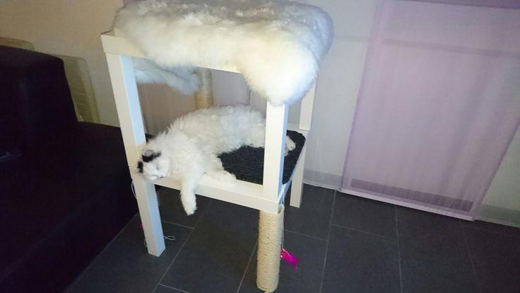 Meine Katze liebt ihn <3  Anleitung: zwei Ikea Beistelltische aufeinander befestigt, Tischbeine mit Spielzeug und Schnur ausgerüstet, Teppich in der Zwischenstufe befestigt und oben hane ich eine Schaumstoffmatte hingeklebt und darüber ein Fellimitat. Weil meine Katze nicht mehr die jüngste ist, habe ich den Katzenbaum neben das Sofa gestellt, dass sie problemlos hochkommt.