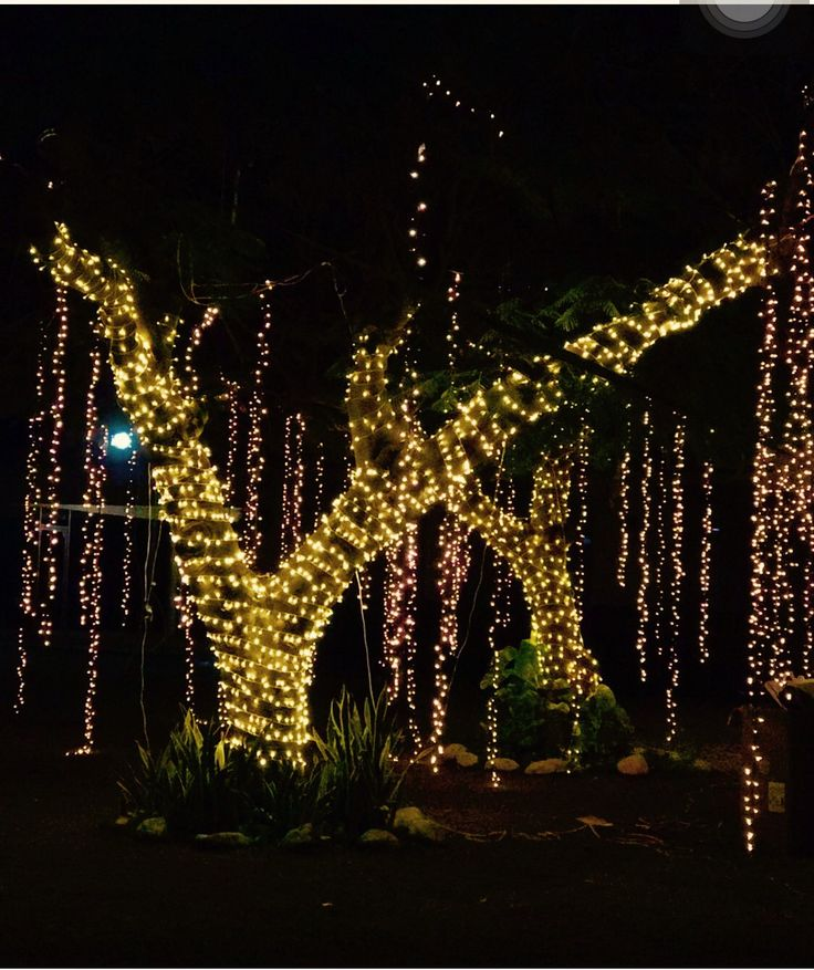 troncos de arbol iluminados con foquitos