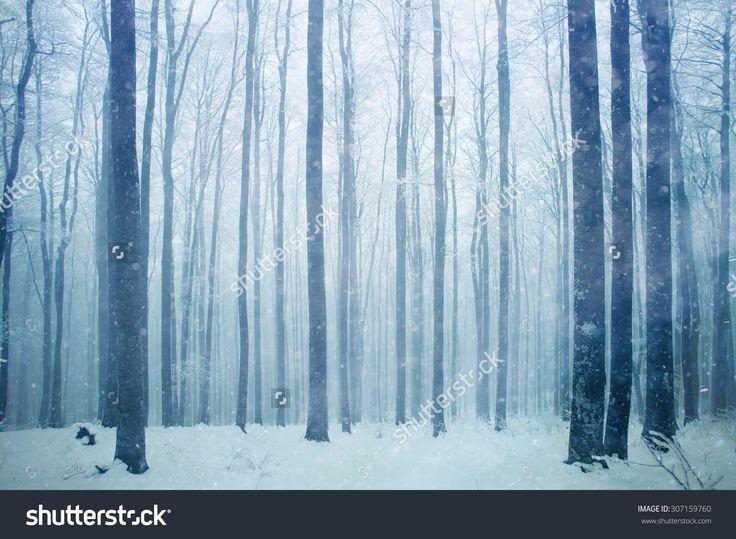 stock-photo-snowfall-in-foggy-beech-forest-landscape-307159760.jpg (1500×1100)