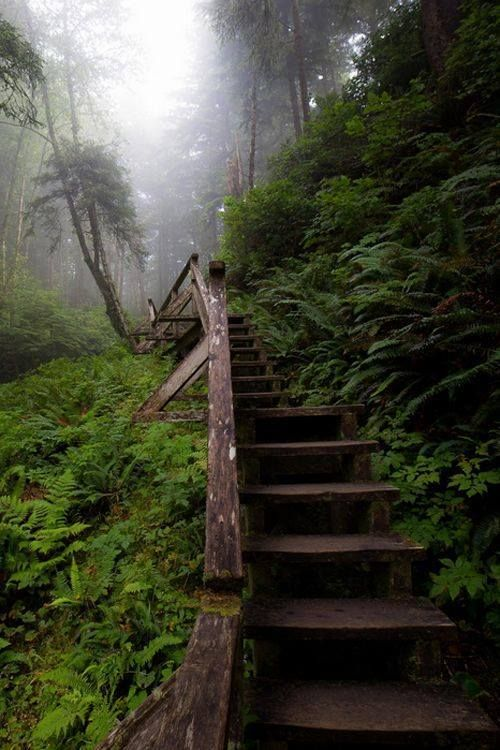 Forest Stairs, British Columbia, Canada.