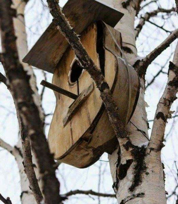 Guitar turned bird house. Love this♡