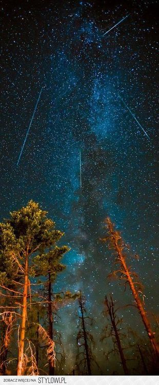 Perseid meteor shower lights up the sky                                                                                                                                                                                 More