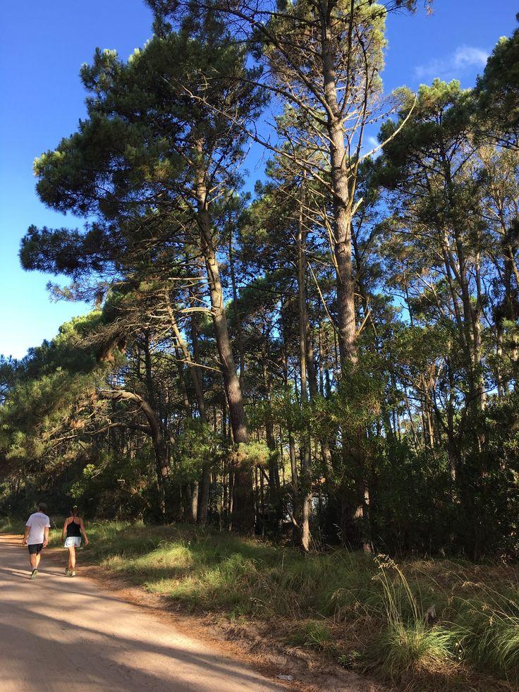 Caminar para hacer ejercicio y relajar la mente en un entorno natural como el de Mar de las Pampas. Camino de tierra, sin asfalto, bosque de pinos y a pocos metros el mar. Vení a Plenilunio a descansar de la rutina.