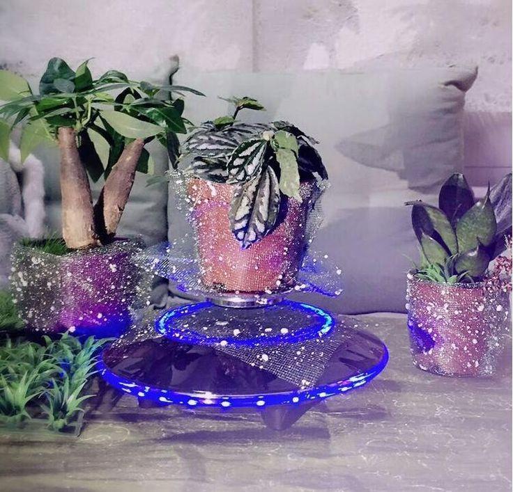 Green plant,air bonsai.