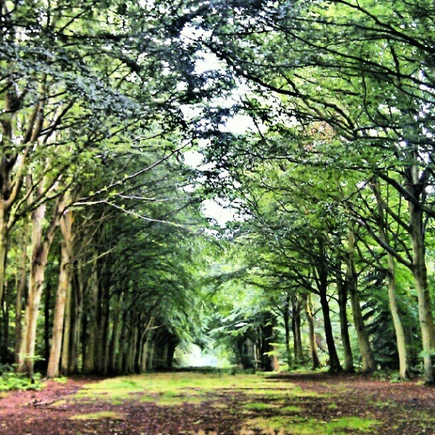 We love @Suzy Holding's Instagram pic of a #GBwalk at Felbrigg in the East of England