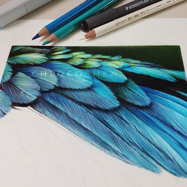 It's been a while since I've worked on any projects but finally some motivation is back. Anyway, here is a work in progress shot of some feather study I've been working on ✒ -Copics and Polychromos pencils. Chloe OShae