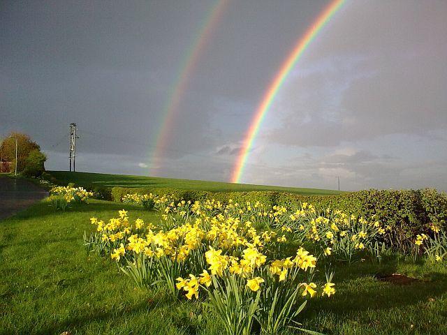Springtime rainbow  Bright sunshine and April showers: Gods Rainbows, Spring Daffodils, Rainbows Gods, Spring Time, Springtim Rainbows, Gods Promi Rainbows, Rainbows Bright, Rainbows And Sunshine, April Showers