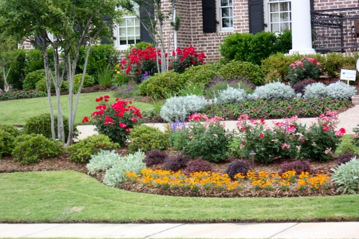 Landscape with knock out roses zinnias dusty miller for Landscape flowers and plants