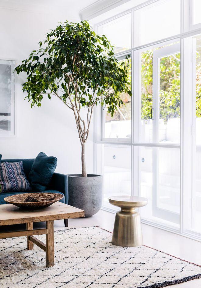 arbre d co int rieure home arbre deco arbres en pots. Black Bedroom Furniture Sets. Home Design Ideas
