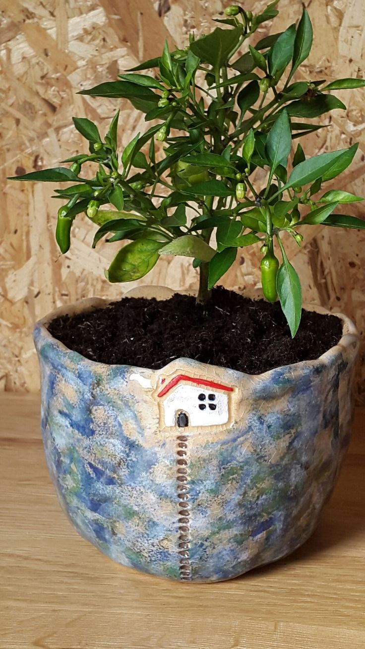Hot House Flowers. Earthenware hand made pot, with clear dipping glaze. With chilli plant.