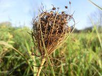 WWW Wiersze Wycieczki Wspomnienia: Haiku o jesieni: W zieloną świeżość trawy, Ospała mucha
