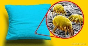 Una manera sencilla delimpiar cualquier almohada encasa