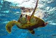 12 Best Places to Scuba Dive in Florida - Key Largo, Miami, Fort Lauderdale - Thrillist