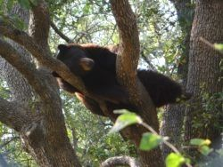 A Shameless Plug for Bears https://thetrek.co/appalachian-trail/a-shameless-plug-for-bears/ #flower #r2r #getoutside