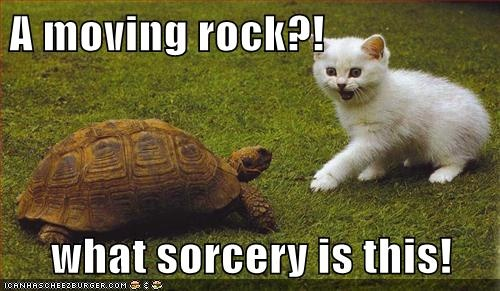 .: Cats, Funny Animals, Funny Picture, Funny Stuff, Humor, Rocks, Turtle, Moving Rock