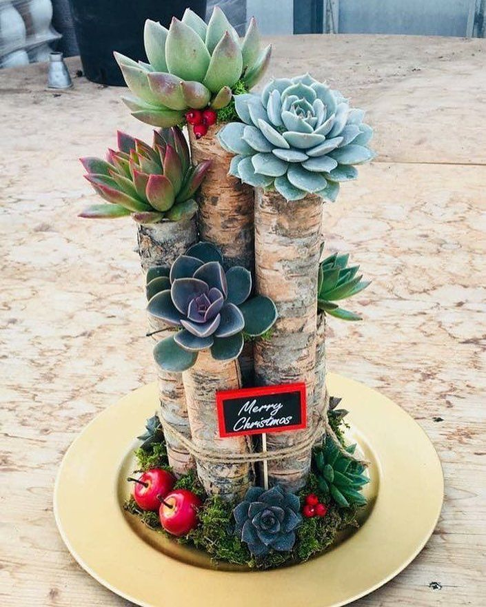 Merry Christmas and Happy Holidays to all of our lovely succulent fans (Photo: Paganopiante Azienda Floricola) – Fatma Kiraz