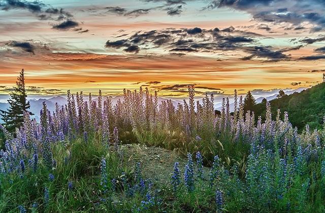 Sunset at Hanmer Springs by Daniel Schwabe, via Flickr