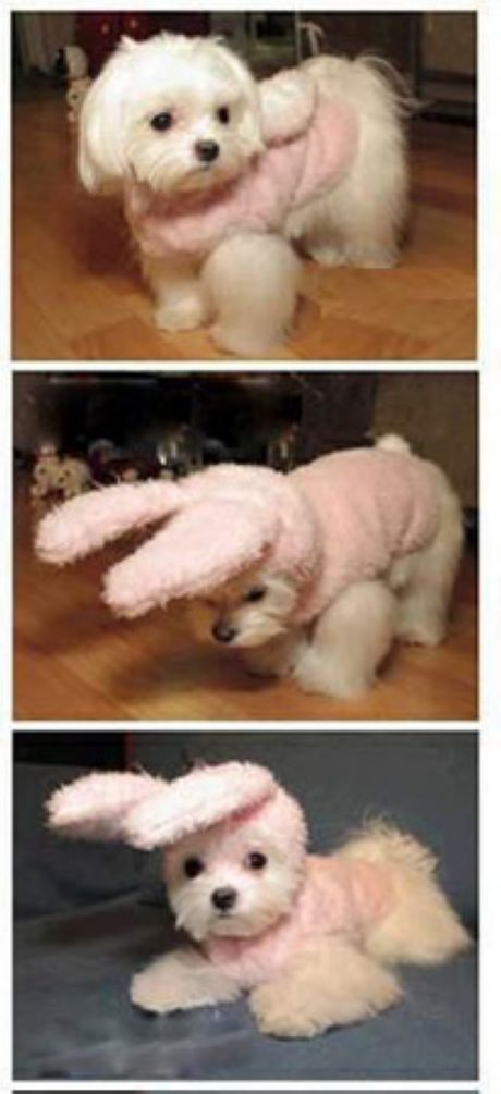 When we have a girl doggie I am absolutely dressing her up like a bunny! Bentley would never tolerate a costume. We've tried.