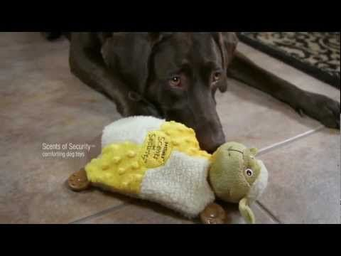 Petlinks® Scents of Security™ Comforting Dog Toys -  Visit http://dvm360.com/FearFree to learn more about Fear-Free veterinary visits