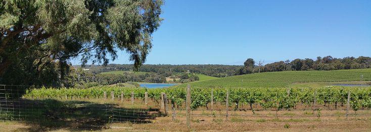 vineyards WA