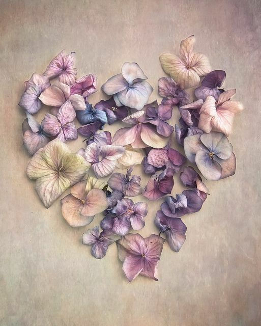 Colors. Pinks. Purples. Violet. Blues. Creams. White. Feminine. Pretty. Natural. Flowers.