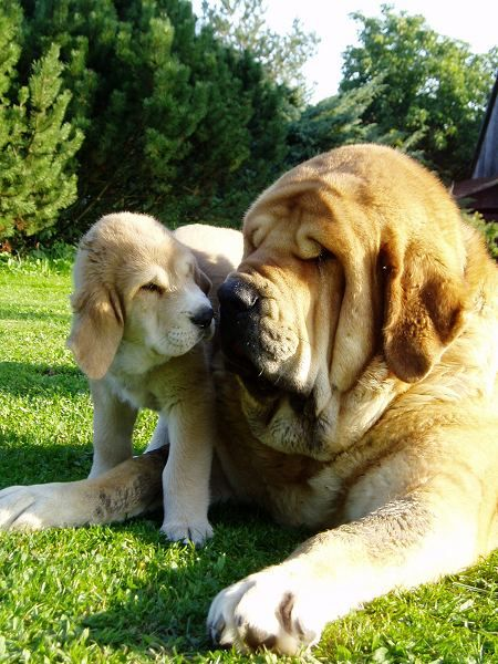 These 28 Adorably Ginormous Dog Breeds Are Bigger Than You Ever Imagined