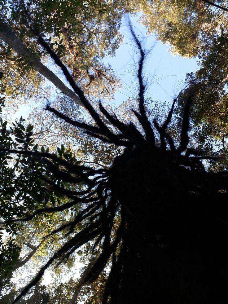 Seirama dengan pohon
