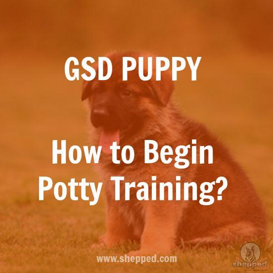 How to begin potty training? German Shepherd Puppy - #germanshepherd #gsd