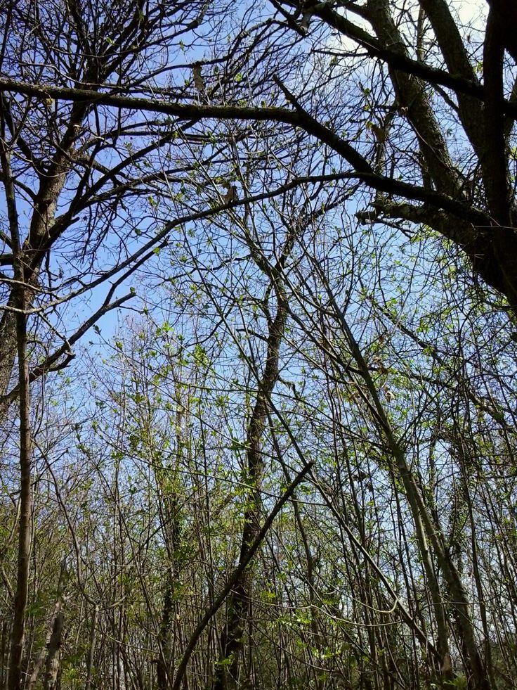 Accesso al bosco, Agriturismo Signorini